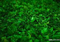 綠茶二三事,關於綠茶的小知識
