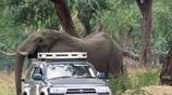 大象跟在車後不走,工作人員下去查看,回來眼眶紅了