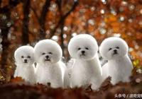 狗狗品種介紹大全,帶你走進狗狗的世界