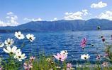 帶上心愛的人,一起去瀘沽湖,赴一場格桑花的盛宴!