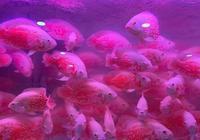 購買觀賞魚注意以下這些選魚的問題,我們飼養起來就會事半功倍!