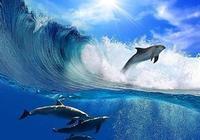 海豚有哪些種類?