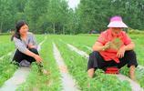 曾經畝收入5000元的農作物,農民大哥種植6畝,今年能賺多少錢?