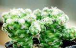 夏季驅蚊小助手,低價植物小盆栽