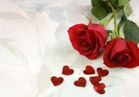 玫瑰與新娘