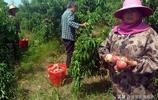 留守婦女摘桃子1小時工資只有10元,網友:今年賣水果的都發財了