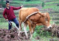 當今農村,60後70後成了最艱辛的一代,為什麼會這樣?