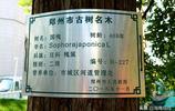 讓什麼記住鄉愁,這棵400年老槐樹見證了鄭州一個村莊興起和消失