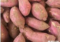 """農村老話""""紅薯沒有巧,只有插秧早"""",這句話有道理嗎?其他措施都不重要了嗎?"""
