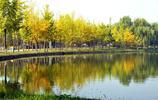 太美了!石家莊人週末可以去這個地方賞秋葉了!