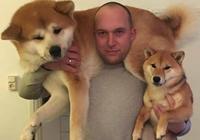 對我們臉盲來說,秋田就是大號柴犬,柴犬就是小號秋田