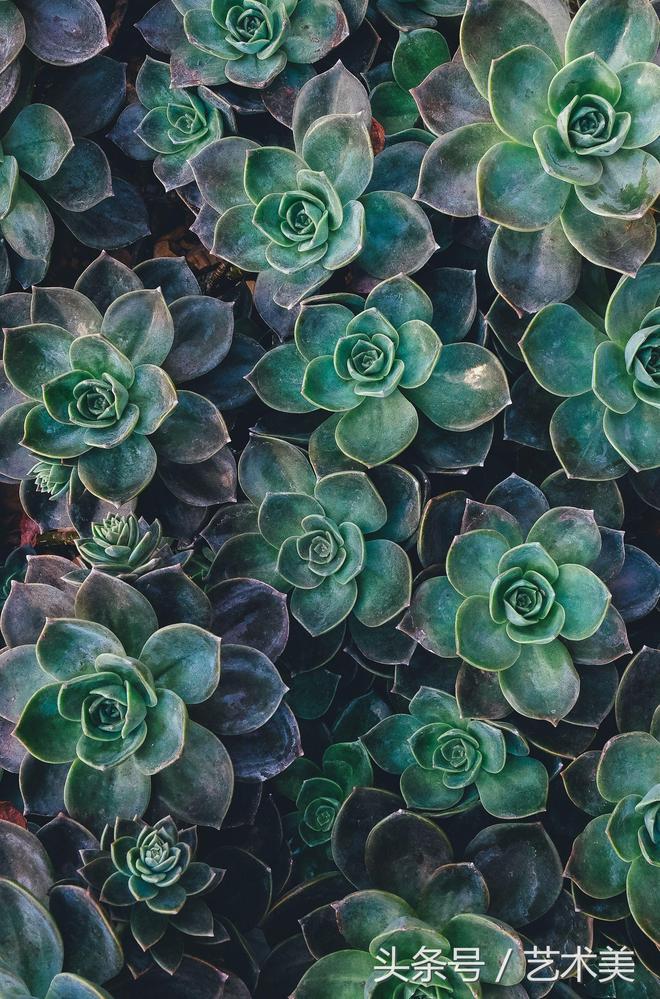 多肉植物花草