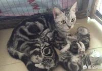 我養了一公一母兩隻貓,公貓絕肓了,母貓快生了,我擔心公貓吃掉小貓,會發生這事嗎?