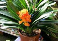 一品紅、萬年青、常春藤、吊蘭等植物,土壤你選對了嗎?
