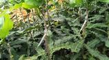 """鄉下有空地,一定要種上這種""""果苗"""",好吃又耐活,營養價值很高"""