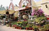 南山荷蘭花卉小鎮,原汁原味荷蘭風情