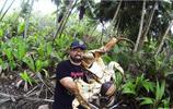 比帝王蟹還要大隻的椰子蟹,擅長爬樹摘椰子,現在已是有價無市