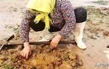 趕海有差距,大媽憑這不相干的工具趕海一挖一大桶!真是絕了!