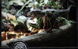 圖集|微觀世界-侏羅紀公園