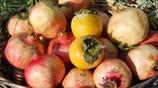 在農村,中秋走親戚,月餅只是擺設,有它們,就夠了!