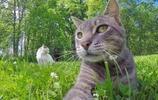 論自拍能力,我只服國外的這隻貓