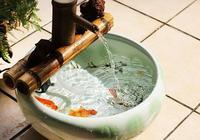 家裡有了生態魚缸,整個家立馬不一樣,點綴客廳格調