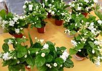 氮、磷、鉀肥還用買?自己在家就能做,花卉用了蹭蹭長!