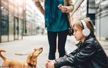 沒那麼聽話的六種狗狗,需要主人更多的耐心,才能讓它們變乖