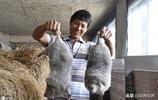 山區農村夫妻靠養殖網紅稀罕物致富,1只能賣到240元,吃貨最愛