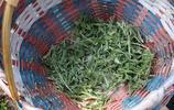 農曆三月的蒿子饃,農村人人都吃過,城裡人想吃?25塊一斤
