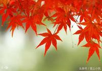 流年似水,葉隨念飛