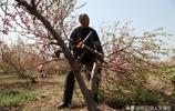 山西農民種桃子不賣果,做成一種稀罕物能致富,看看是什麼
