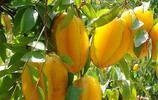 新品種嫁接果樹好養易活,家裡有地的趕緊種,年頭栽來年尾吃