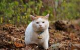 貓叔萌照:籃子貓叢林玩耍,哪裡都少不了它的影子