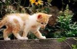 動物圖集:動物寫真