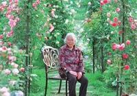 溫州87歲老奶奶的玫瑰花園!8個子女為她打造,100多個品種