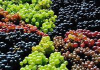 秋季來了介紹幾個葡萄小祕方