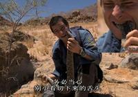 貝爺抓到非洲最危險的鼓蝮巨蝰,用沙子烤著吃,就是這麼豪猛爽