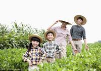 乾貨:我國家庭農場大數據分析!