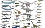 現存體型最大的幾種鯨魚