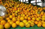 河北邯鄲南大堡水果市場,本地懶漢瓜才賣幾毛錢,外地西瓜不好賣
