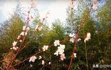 春暖花開風光無限好,咸陽絲路公園踏青賞桃花