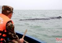 救援抹香鯨,武警官兵保駕護航