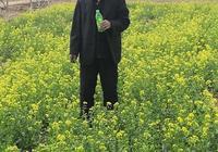 王建林: 油菜花開