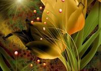 花的海洋、花的浪漫、花的心情、花的迷戀、浪漫花兔
