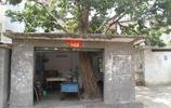 東莞:屋中有樹,戶主保護樹木意識肯定很強