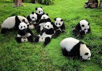 如果被大熊貓攻擊,將大熊貓殺死,算正當防衛嗎?
