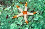 海洋世界圖集:海星高清美圖
