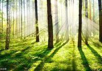 村上春樹《挪威的森林》經典語錄