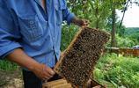 黑龍江畔養蜂人,優質椴樹蜜只賣十幾元,放蜂辛苦不掙錢
